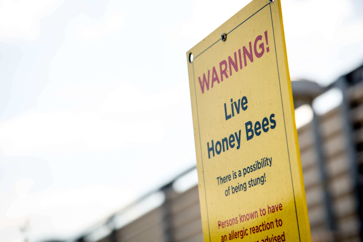 'Live from the hive' honey gives £2,000 to local charity preview image